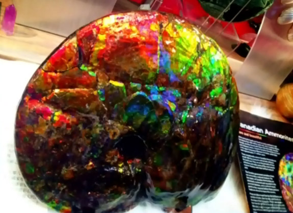 vancouver on the lookout for stolen ammolite