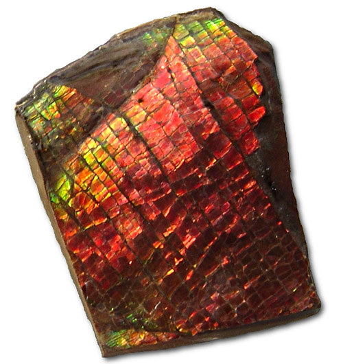 Vancouver Police On The Lookout For Stolen Ammolite