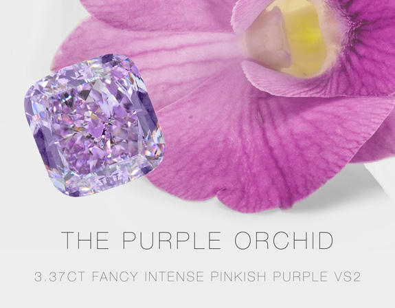 purpleorchid2