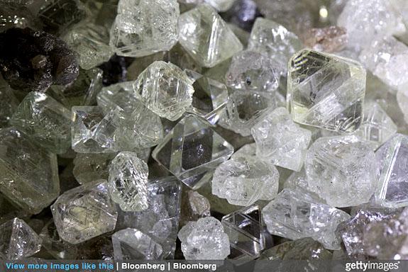 diamondplant2